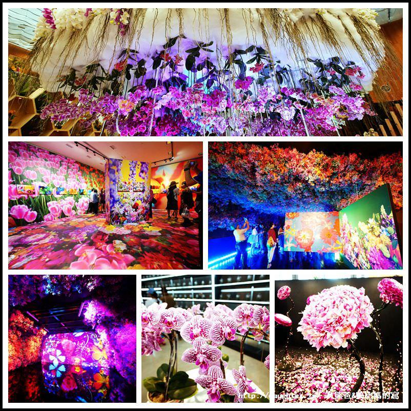 【2018臺中世界花卉博覽會】首推『后里馬場森林園區-花舞館』展現台灣蘭花王國之美!